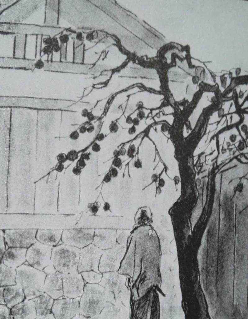 Takoyaki de Tebeos: Caqui japonés. De frutas y filosofía oriental, que esto no deja de ser un manga de samurais :-).